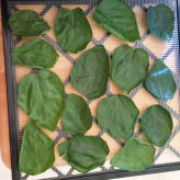 leaves-ready-to-dry